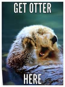 Sea Otter Meme - 18 best otters cuz why not images on pinterest