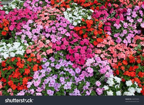 bed of flowers horizontal bed of flowers stock photo 44870269 shutterstock
