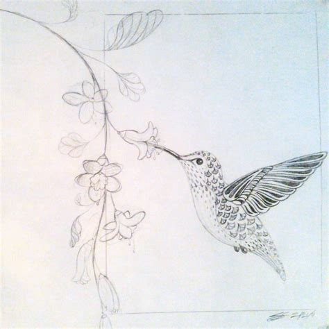 hummingbird and flower sketch