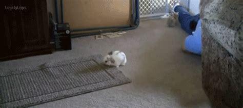 Bathroom Bunny Gif Animated Animal Gif S