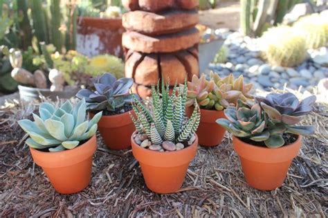 succulent planters for sale 646 best succulents for sale images on