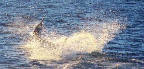 bdo fishing boat worth it 500 lbs blue on spinning bloodydecks