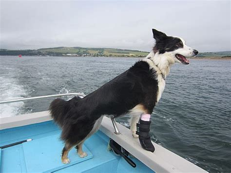 dog boat dolphin moray firth dolphins