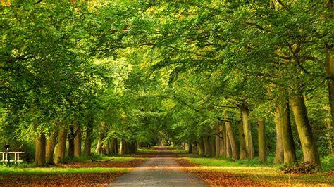 imagenes de paisajes verdes para pantalla fondo de pantalla carretera arboles verdes valla hd