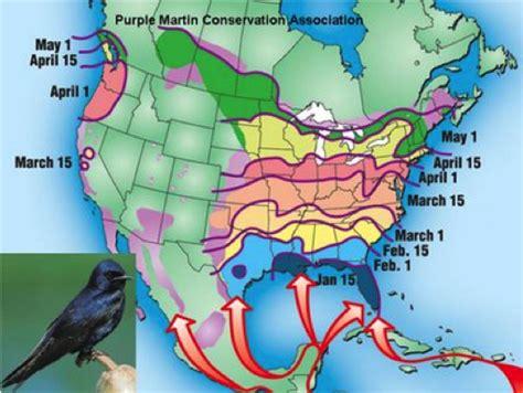 bird mortality biogrounds