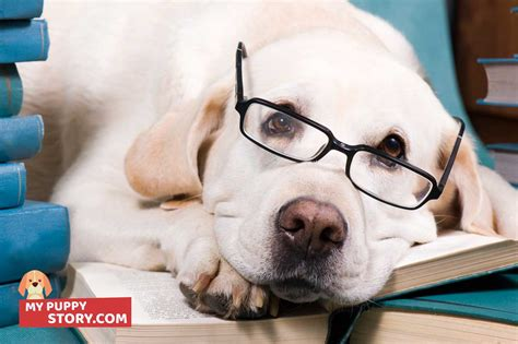 how to your from barking how to deal with your barking my puppy story