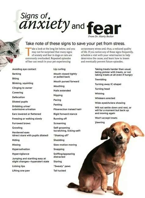 how to treat anxiety in dogs 25 best ideas about anxiety on separation anxiety care and