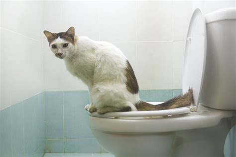 how to keep out of litter box 7 ways to keep cat litter from tracking everywhere cattime