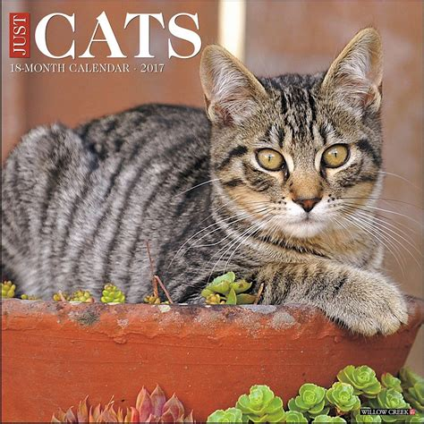 Cat Calendar Just Cats 2017 Wall Calendar 9781682340509 Calendars
