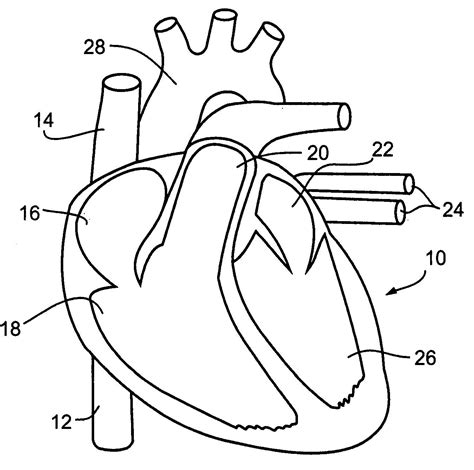 Coloring Pages Circulatory System