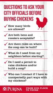 chickens for backyards coupon code can i raise backyard chickens in my area wells brothers