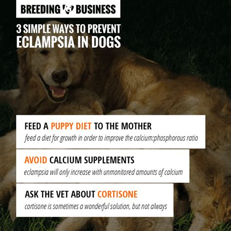 milk fever in dogs eclsia hypocalcemia and blood calcium levels in dogs