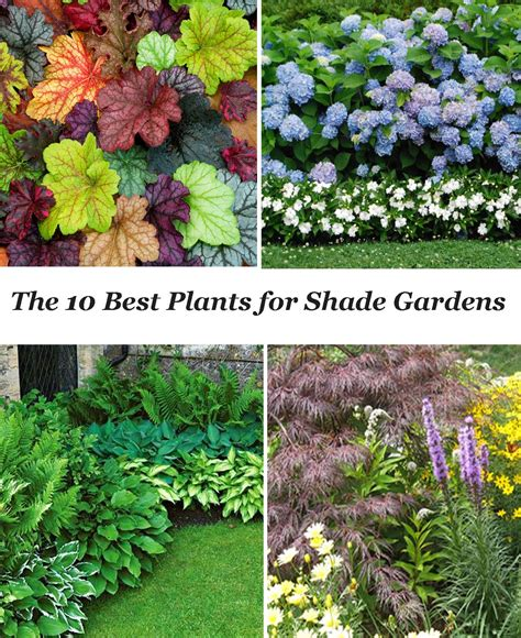 piante da ombra in vaso piante da ombra in vaso cheap piante da ombra in vaso