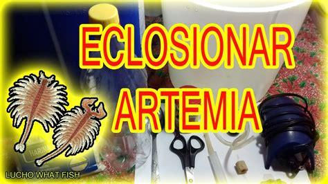 alimento vivo  peces como eclosionar artemia salina tutorial youtube
