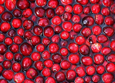 Cranberry Organic Buah Cranberry Organik 500gr organic cranberries earth s general store