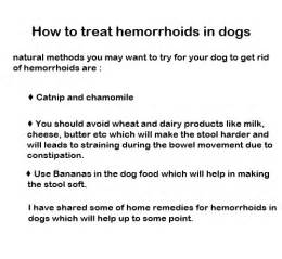 Image result for hemorrhoids treatment dogs