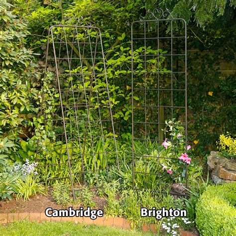 gartenbedarf pflanzen rankgitter cambridge g 228 rtner p 246 tschke