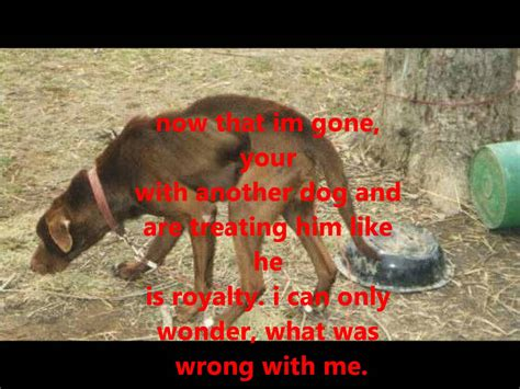 i mammal the story of what makes us mammals books sad animal abuse story warning graphic content