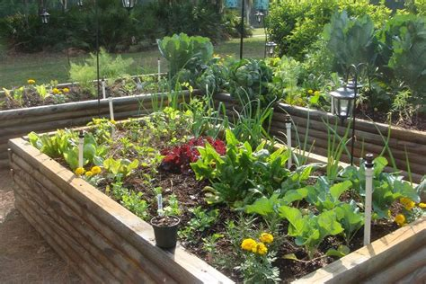 Easy Vegetable Home Gardening Ideas Easy Diy And Crafts Easy Vegetable Garden