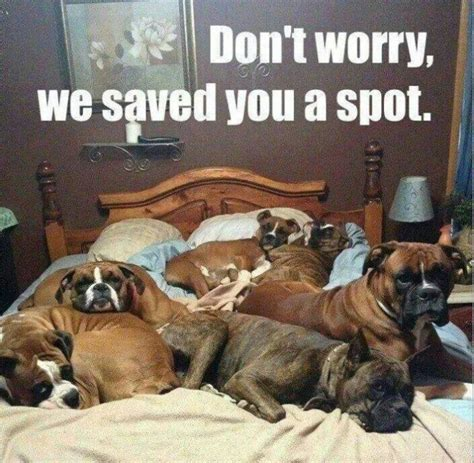 Dog In Bed Meme - dont worry dog meme jokes memes pictures