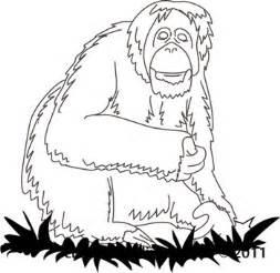 Outline Drawing Orangutan by Animals Orangutan 03 Outline Classroom Clipart
