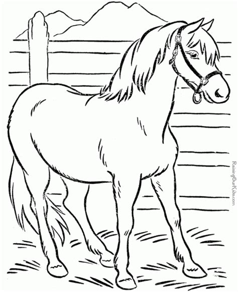 animals a hilarious coloring book for of all ages books coloring pages of animals coloring home