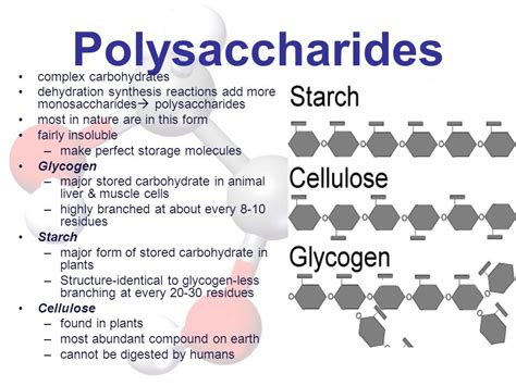 carbohydrates polysaccharides molecules of ppt