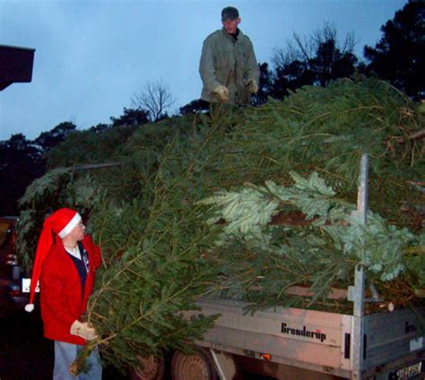 boy scouts usher in holidays with tree sale news stripes