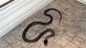 Garden Snake House Snake House Family Home In Idaho Turns Out To Be Satan