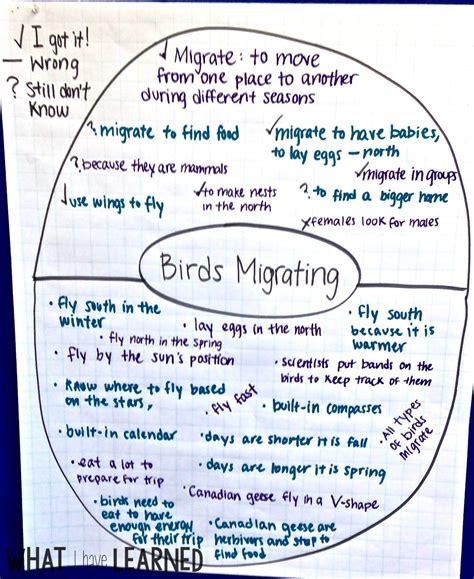 organize facts informational writing week 5 bird