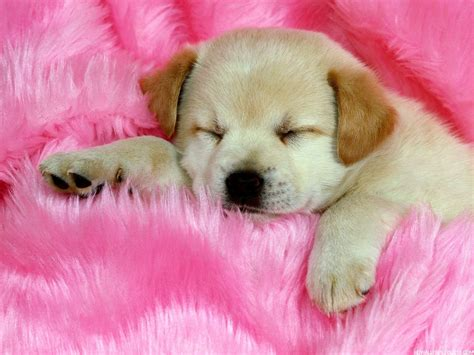 cute dog wallpapers cute dog hd wallpapers