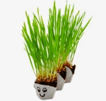 Teh Hijau Per Kardus percobaan sains sederhana membuat kreasi pot rumput cantik unik dari kardus telur