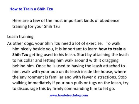 how to teach a shih tzu tricks how to a shih tzu