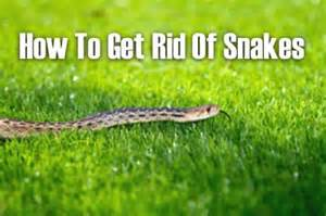 how to get rid of snakes homestead survival