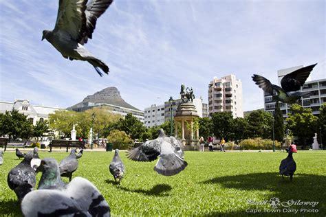 Garden Of Company Company S Gardens Cape Town Daily Photo