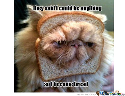 Bread Meme - became memes best collection of funny became pictures