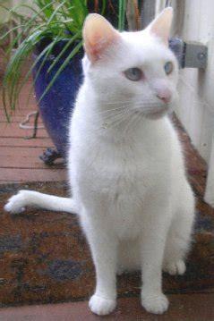 Topi Kucing Putih kucing the cats us and we the cats