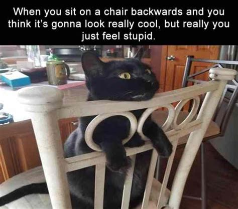 Cat Sitting At Table Meme - funny pictures of the day 32 pics funny pictures daily lol pics