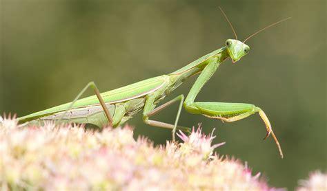 asparagus celebrations beneficial bugs  news