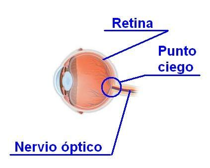 imagenes retina web 1000 images about el ojo humano 191 sab 205 as que on