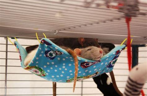 Handmade Rat Hammocks - 17 best images about hamster on