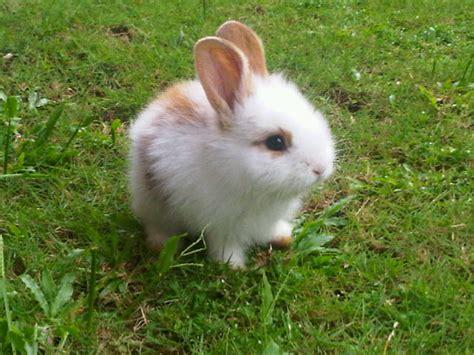 gambar lucu kelinci lucu lagi makan gambar lucu kartun lucu apps directories