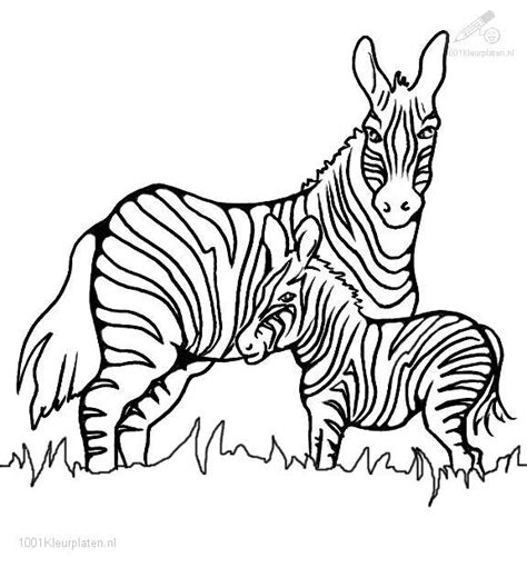 coloring page of zebra free zebra print a coloring pages