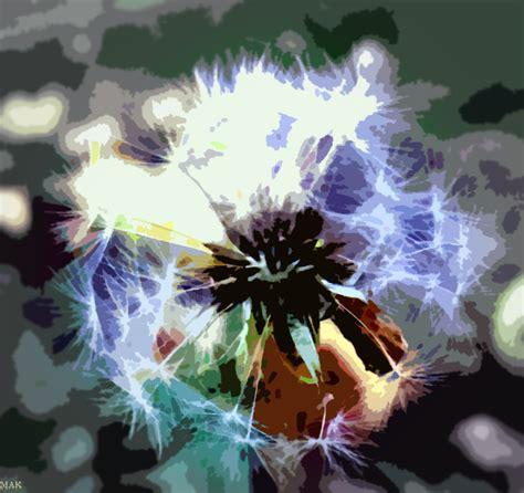 dandy flowers dandy flower by partyboy9289 on deviantart