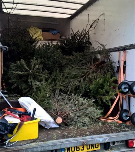lincoln christmas tree recycling service raises 163 5k for st