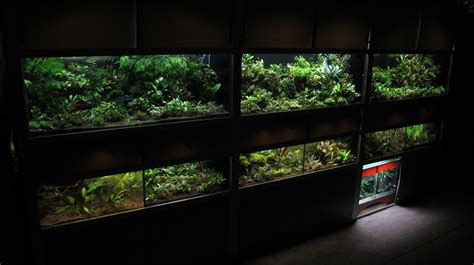pin na nastence aquarium terrarium  home