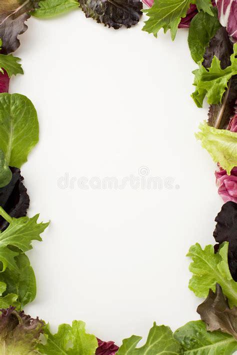salad border stock photo image  isolated white life