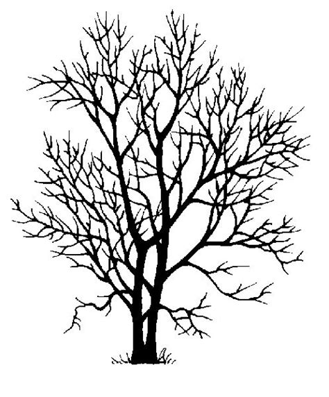 ash tree tattoo 57 best trees images on forests nature and