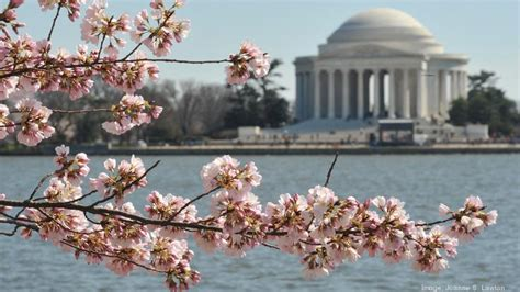 national cherry blossom festival national cherry blossom festival national park service