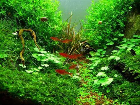 nano aquarium einrichten schritt fuer schritt anleitung